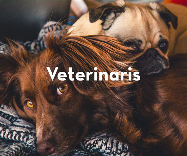 Veterinaris